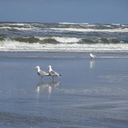 Meeuwen op het strand